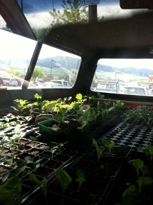 Baby plants en-route to the farm..